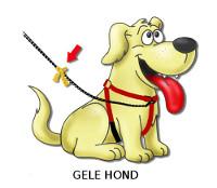 Gele-Hond-Profiel